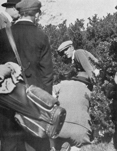 1933-woollam-in-gorse.JPG